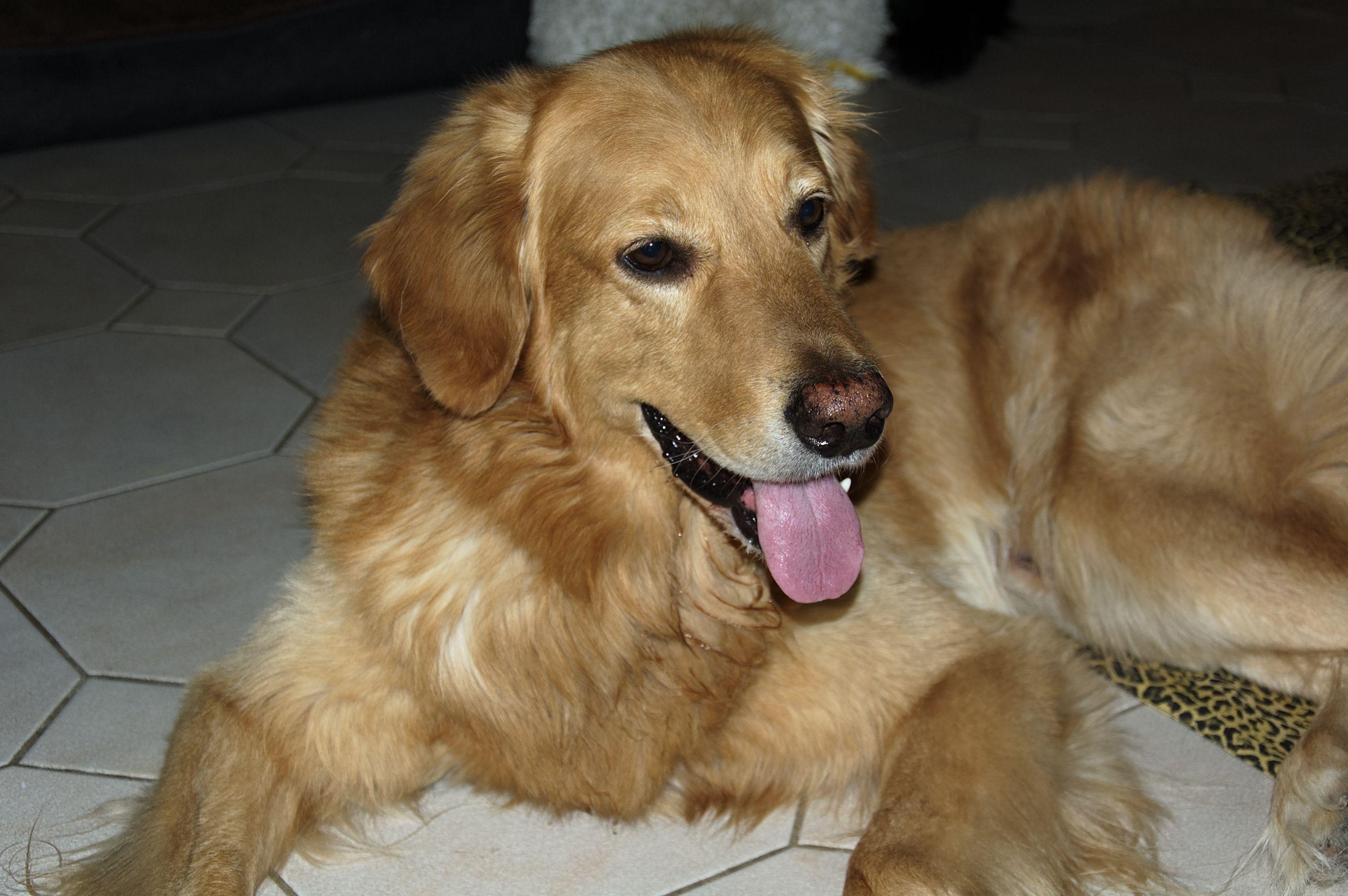 Hund Giri