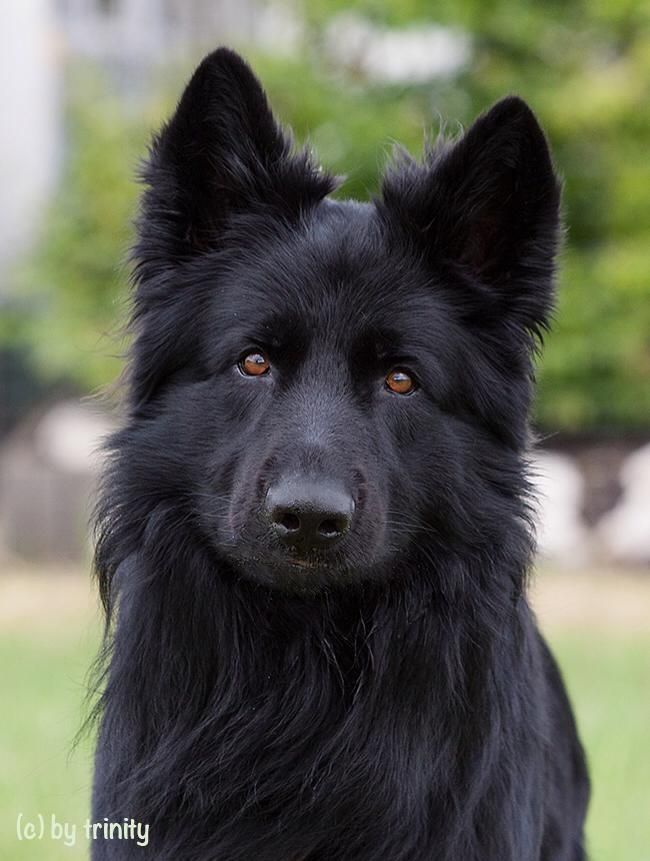 Haustier Hund Faustino