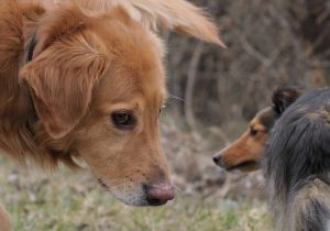 Körpersprache der Hunde