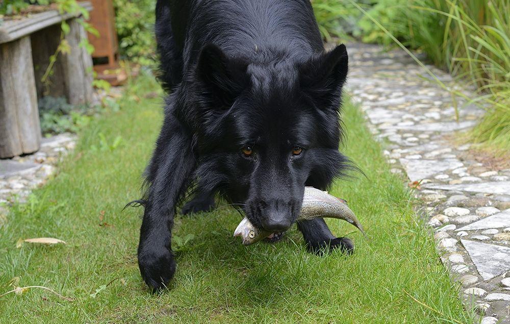 Richtige Ernährung Hund
