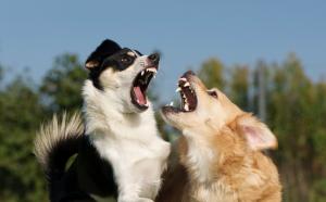Arbeit mit aggressiven Hunden