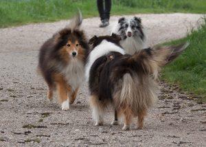Hundebeobachtungen im Freien