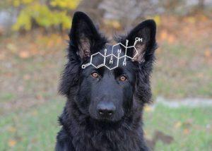 Hormone Hund