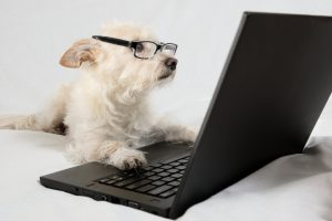 Hund lernt
