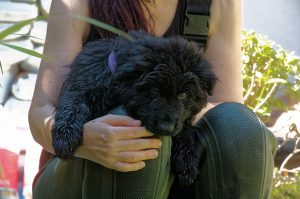 Vom Welpen bis zum Junghund