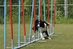Hund Fitness Border Collie