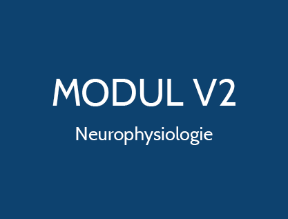 Neurophysiologie Gesundes Tier